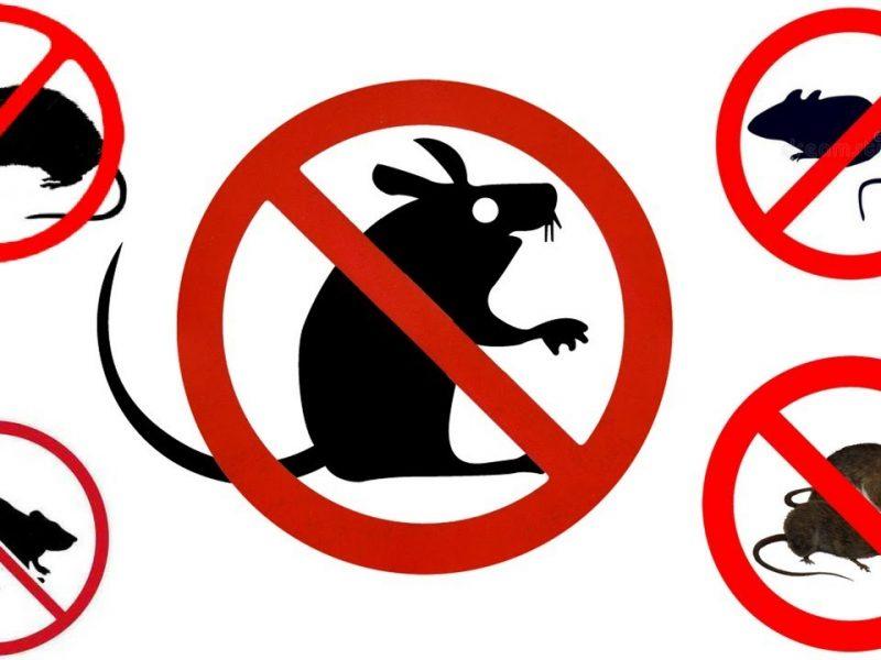 De ce recomand folosirea unui aparat împotriva șoarecilor